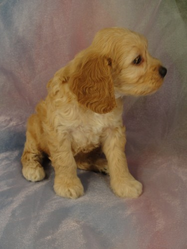 Female Cockapoo puppy for sale #24 Born February 15, 2012  4